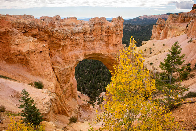 Aspen and a hole at Bryce