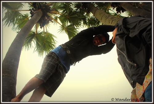 Tree climbing - Chirala
