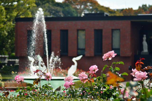 バラ園_石橋文化センター Rose garden
