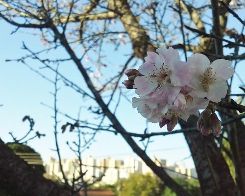 natureza-urbana_15191446455_o