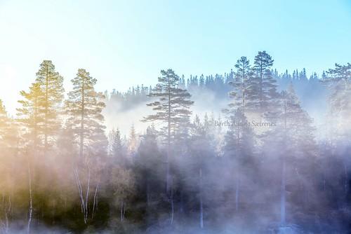 morning autumn trees sky sunlight mist tree nature norway misty fog forest sunrise woodland daylight norge natur foggy nopeople scene skog be tre dis tåke morningmist drammen trær buskerud beautyinnature drammensmarka nedreeiker morgendis taake autumnphotography