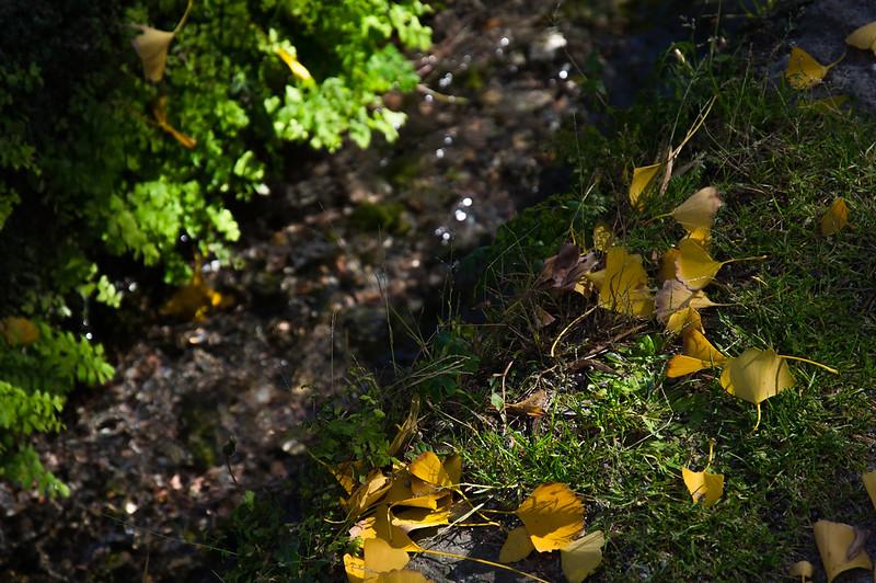fall & stream