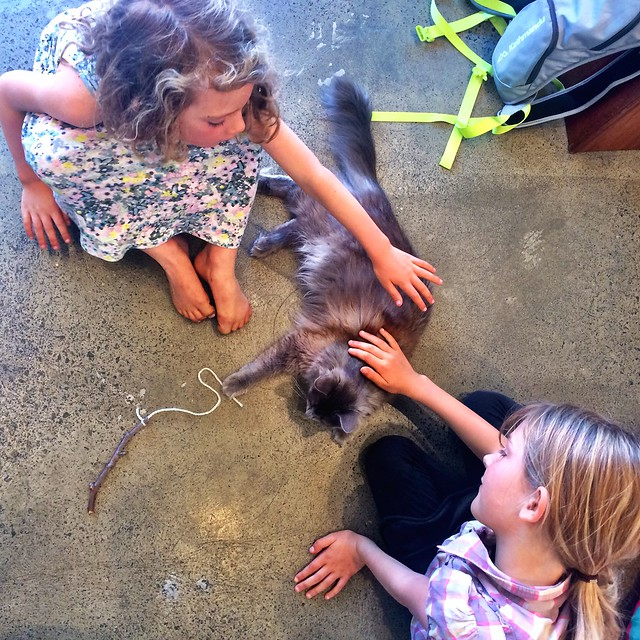 The Smalls in heaven at the Cat Cafe.