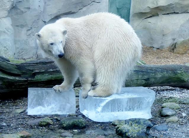 International Polar Bear Day 2017-02-27