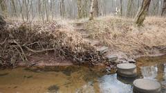 DSCN0965 187 Concrete steppers across creek