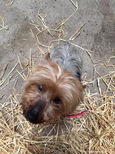 Fri, Mar 10th, 2017 Found Male Dog - Kildare Town, Kildare