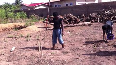Planting moringa seeds directly B2