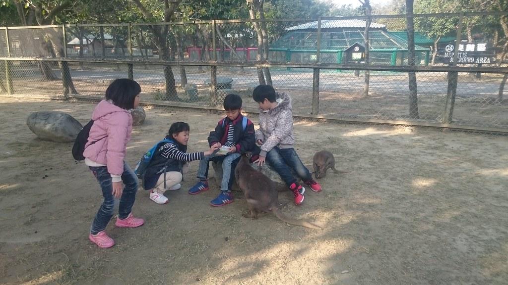 台南市學甲區頑皮世界野生動物園區 (124)
