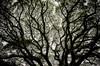 Magnificent Tree by - m i l i e d e l -