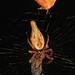 Arachtober 25 #4 - Trashline Orbweaver - Cyclosa conica, Pickering Creek Audubon Center, Easton, Maryland by judygva (out for a few days)