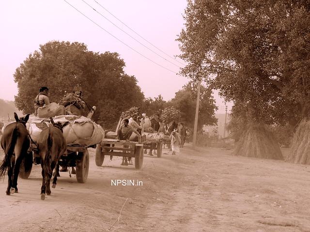 Animal Fair: Camel Fair: Mela finished, let's return towards home
