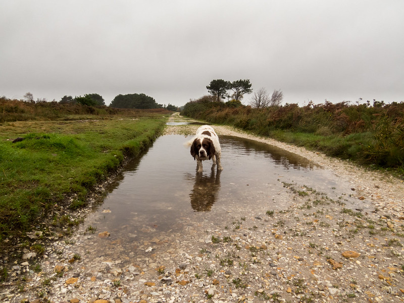 Big puddle time