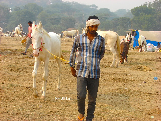 Animal Fair: Horse Fair: practice also makes a mare (female horse) perfect