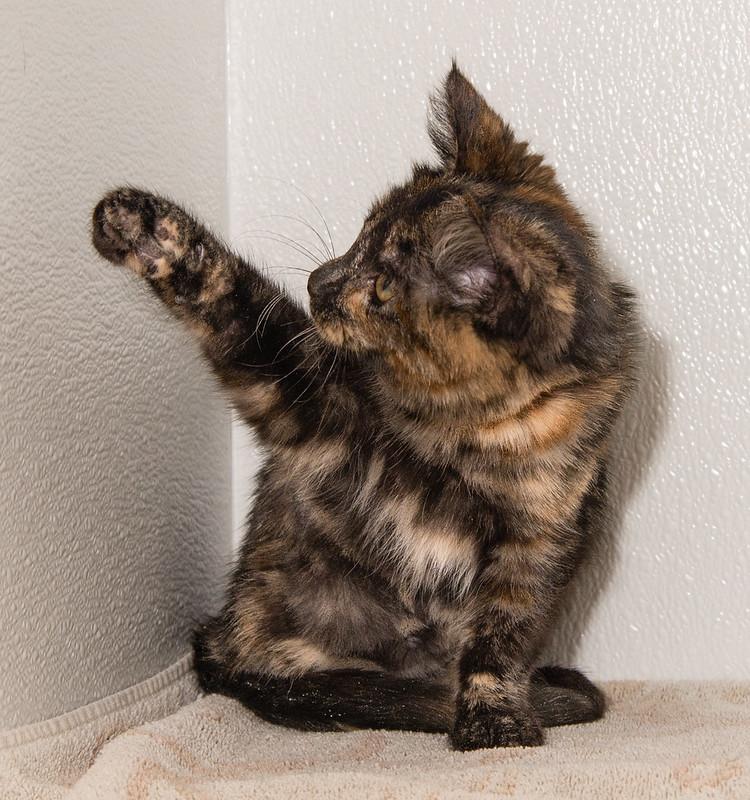 Kitten Stacy