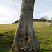 Tree on tiptoes-3