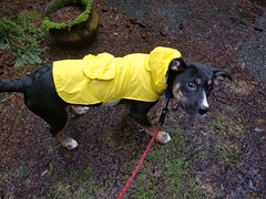 This raincoat is almost too small