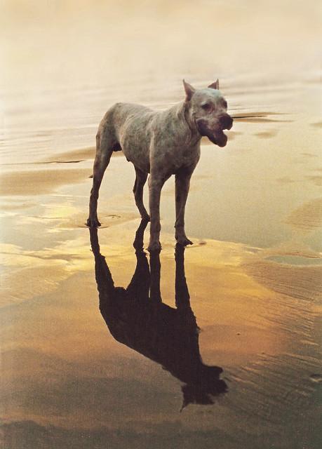 Perro en la playa de Mazatlan, Mexico (2000)