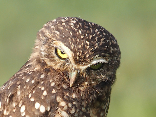Unhappy owl