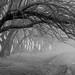 Fog on the Trees ©2017 Steven Karp by kartofish