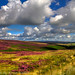 The West Yorkshire Moors