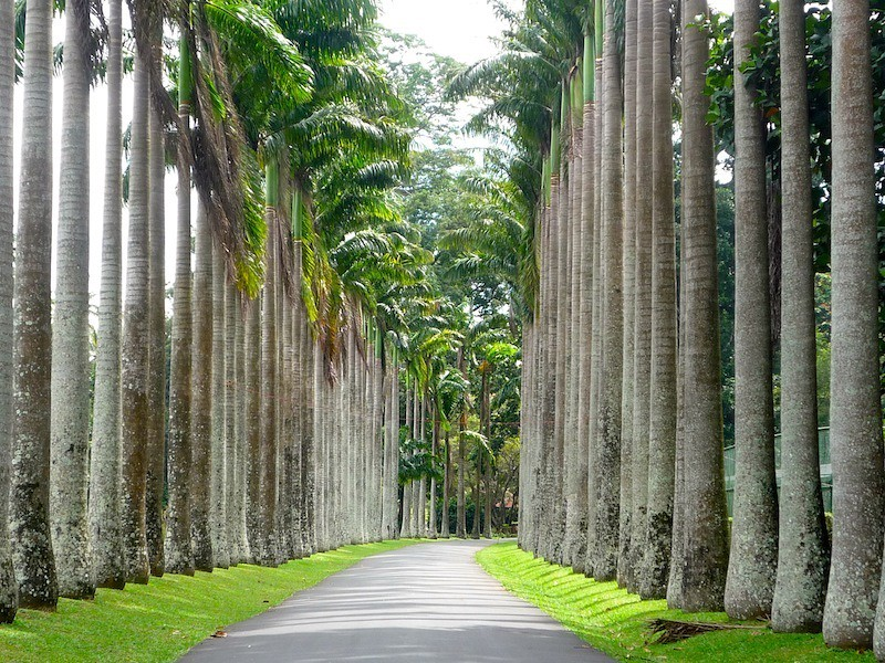 1386432731_1379167517_cabbage-palm-avenue