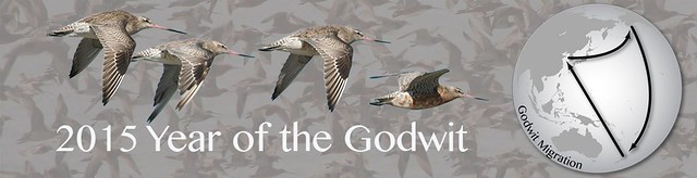 Banner-Year-of-Godwit