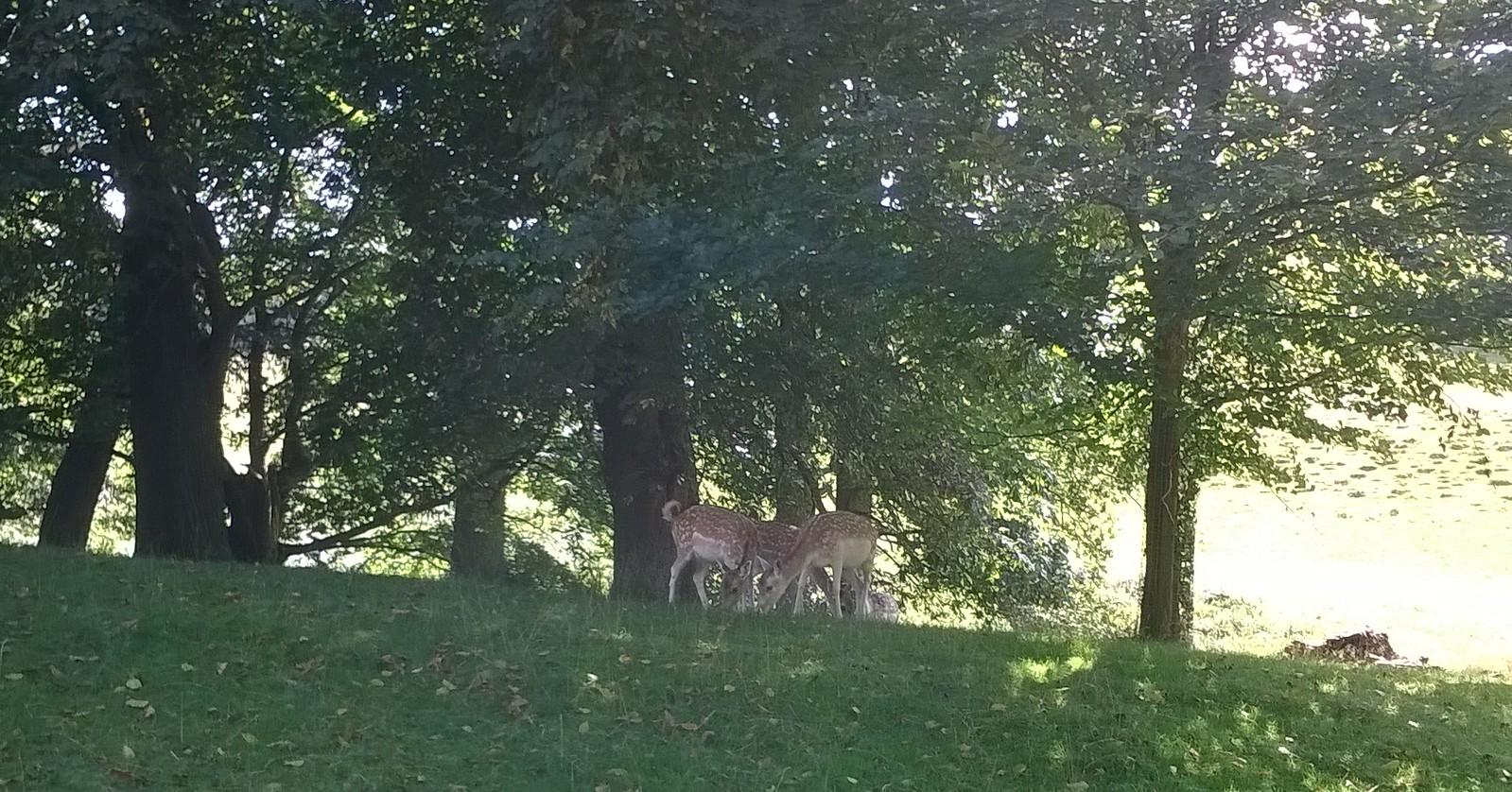 Calm down deer !