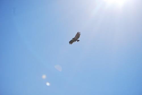 696 Overhead