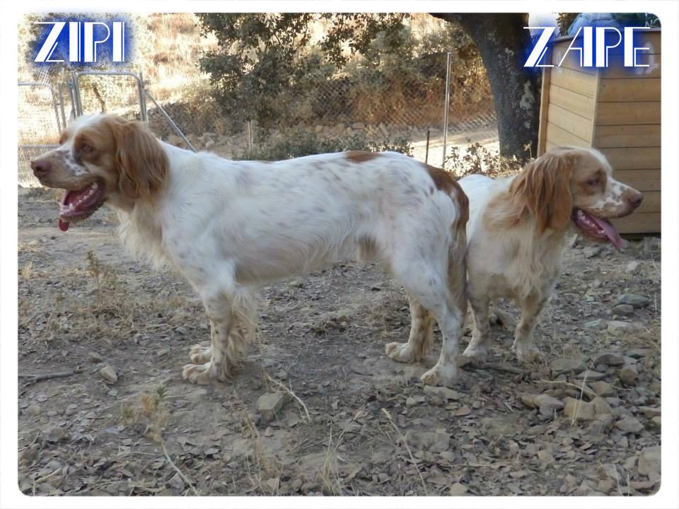 Zipi y Zape 1
