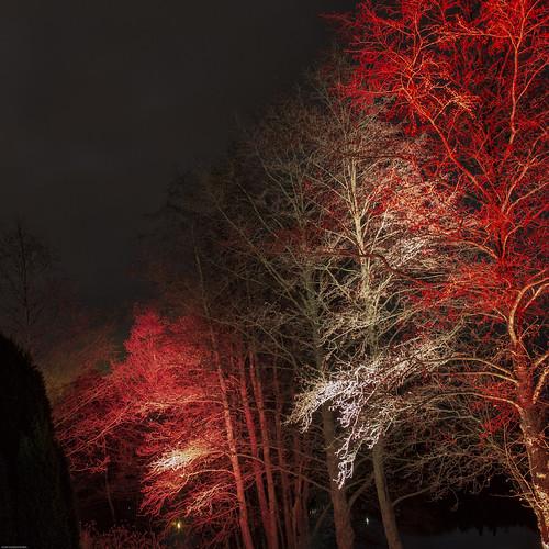 light red tree night suomi finland river landscape photography colorful long exposure puu luonto yö valo kouvola punainen joki kymi kuusankoski värikäs pitkä valotus
