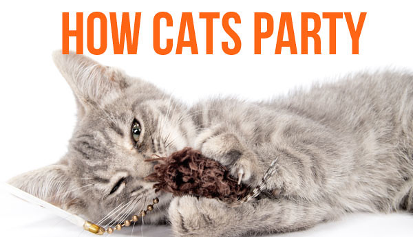 how-cats-party