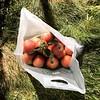 Annual apple- picking birthday shenanigans. #larrilandfarms #traditions #fall #apples