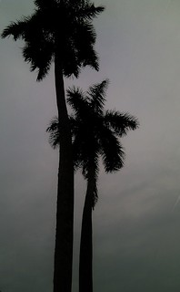 High upon the sky: Palm trees in front of Shat Gambuj Mosque, Bagerhat, Khulna