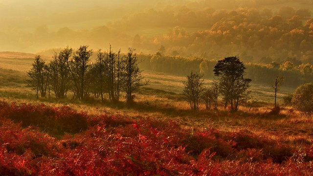 Ashdown Forest Mist (Explored)