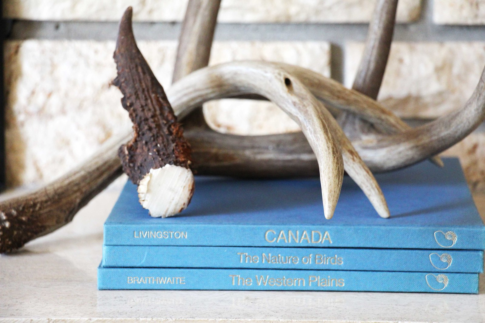 antlers on a stack of books