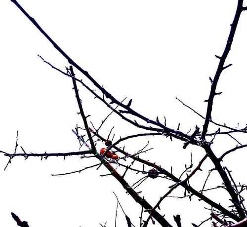 #autumn #herbst #instagood #goodtimes #goodday #thüringen #turingia #bleicherode #germany #deutschland #baum #tree #apfelbaum #appletree #nature #natural #natur #last #lasthero #letzter #letztehelden #forget #vergessen