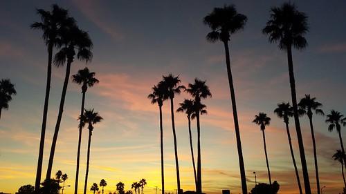 sunset arizona palms evening desert partlycloudy