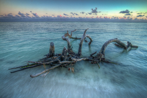 park sea tree water honda keys state florida bahia emerald grape hdr