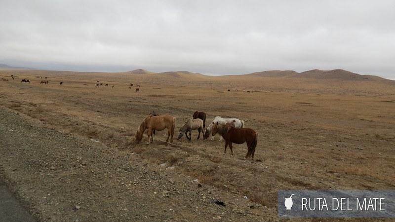 Desierto Gobi Mongolia (25)
