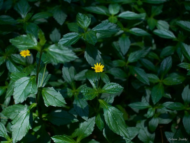 Yellow Flower on Green Leaves