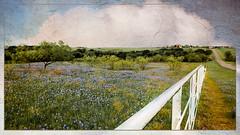 Storybook Landscape_082024-