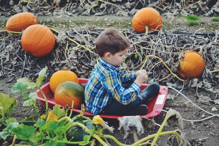 pumpkin ponder