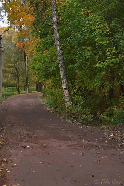 autumn_roads_09