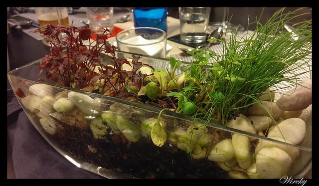 Maceta de hierbas comestibles