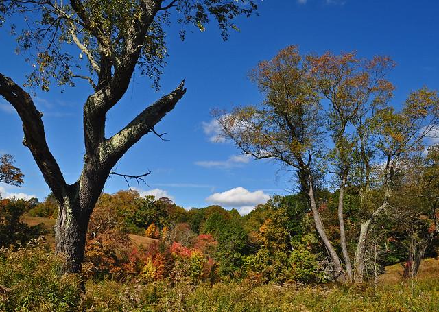 Meadow Garden (25)