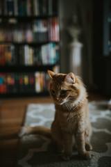 My Perpetual Kitten
