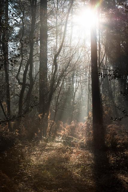 Header of Forest Sun