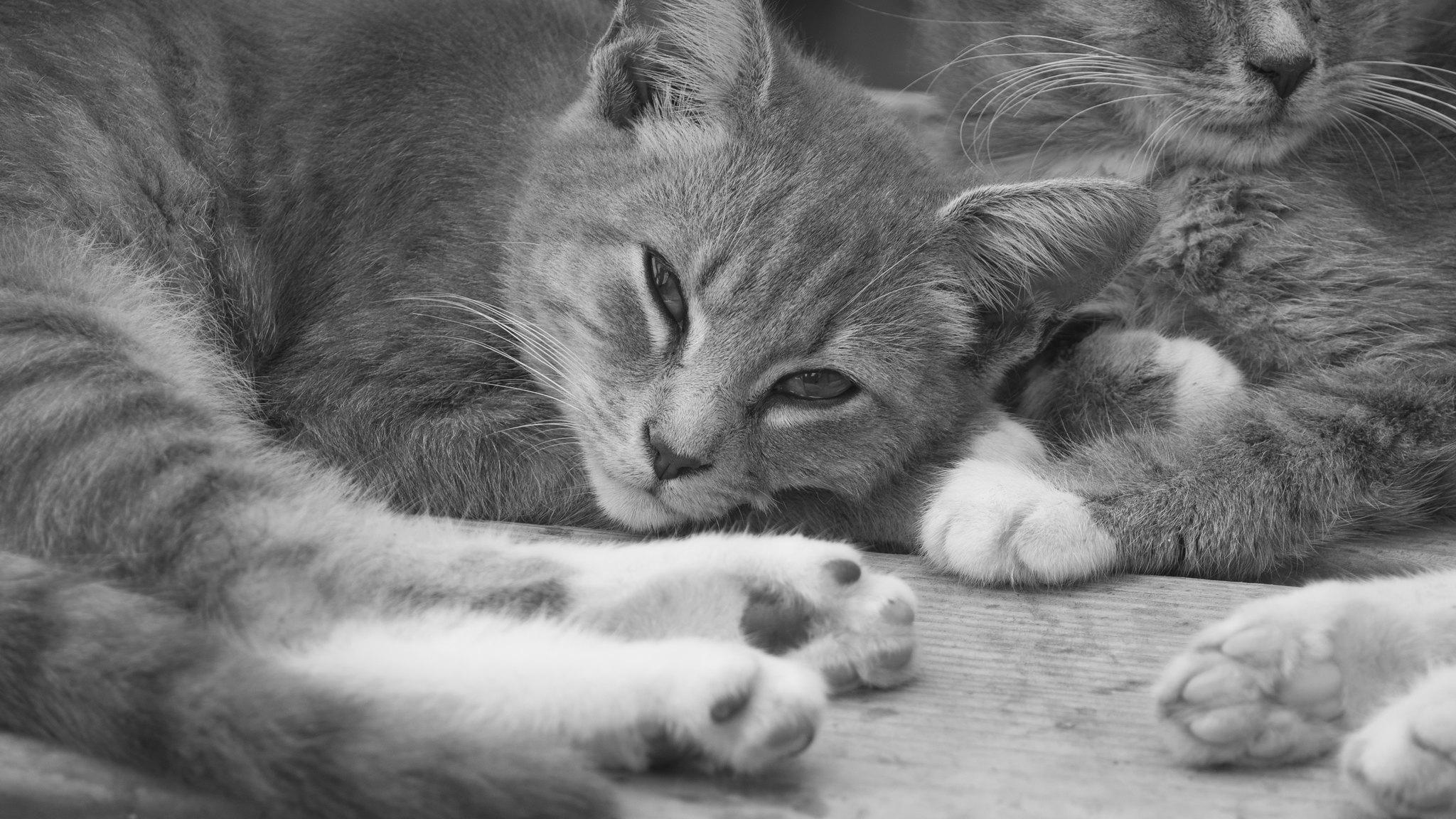 trailer-park-kitten