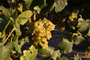 Viansa Winery #2 by ccb621