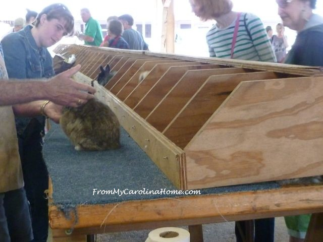 State Fair 2015 - rabbit judging